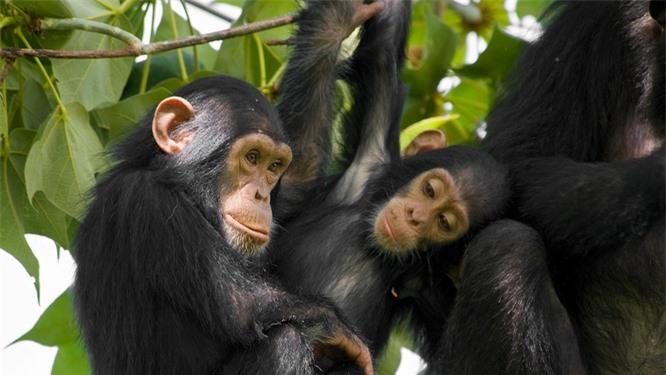 Bạn có biết 10 loài động vật nào thông minh nhất trên hành tinh? ảnh 1