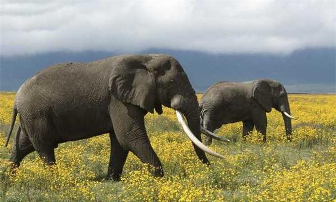 Bạn có biết 10 loài động vật nào thông minh nhất trên hành tinh? ảnh 9