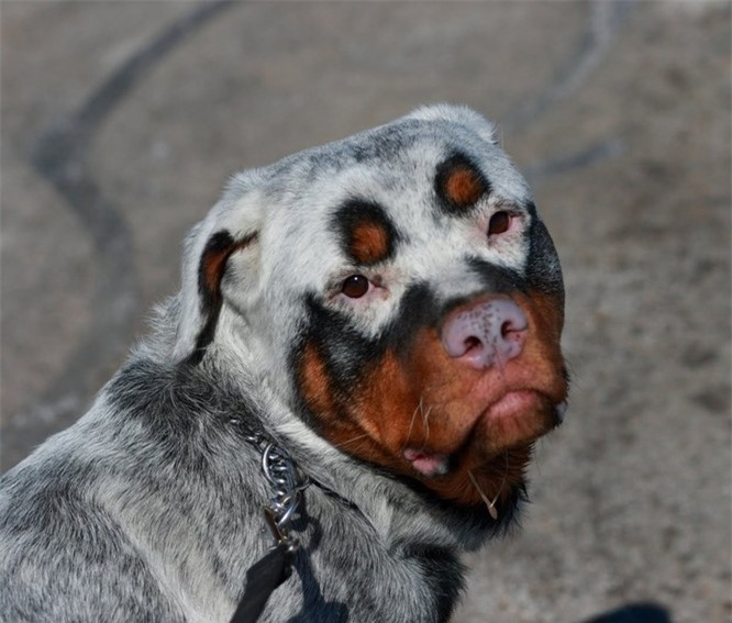 Phát cuồng với 15 loài động vật được sinh ra với mặt nạ ảnh 1