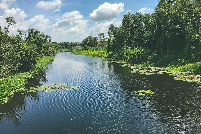 Về Làng nổi Tân Lập - Check-in đường xuyên rừng tràm đẹp nhất Việt Nam - Ảnh 1.