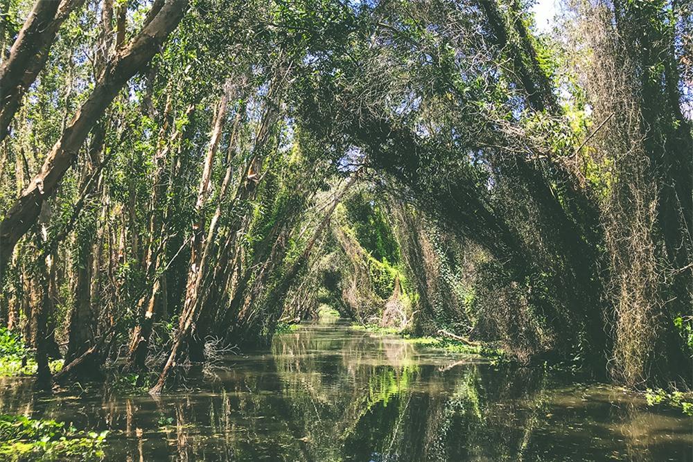 Về Làng nổi Tân Lập - Check-in đường xuyên rừng tràm đẹp nhất Việt Nam - Ảnh 9.