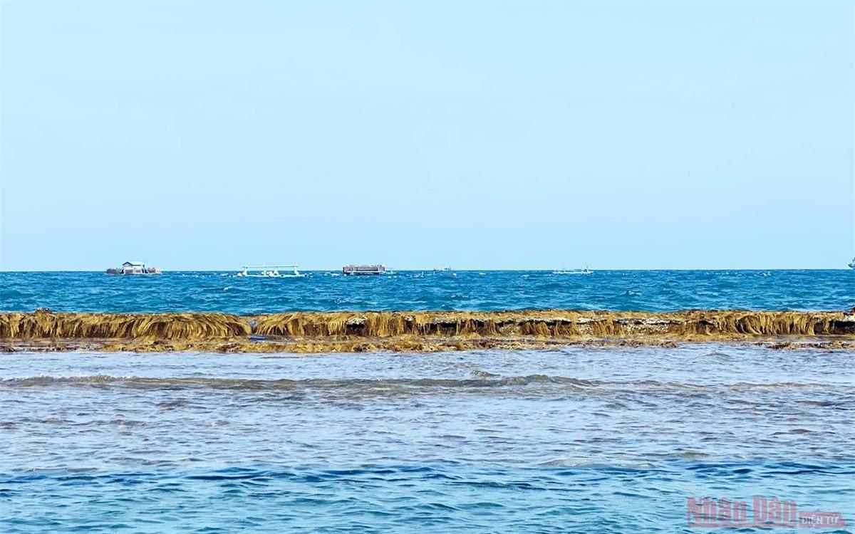 Bức tường bí ẩn dưới đáy biển Quy Nhơn -0