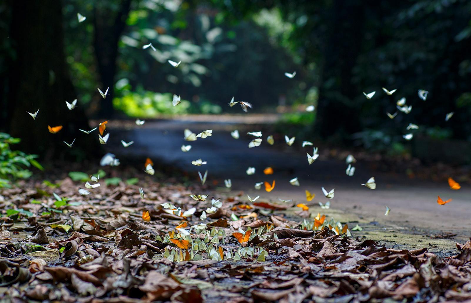 Nằm tại Ninh Bình, vườn quốc gia Cúc Phương có thể khám phá bằng cách đi bộ, xe máy hoặc xe đạp, bạn sẽ choáng ngợp và có những hình ảnh đẹp nếu đến đây vào mùa bướm