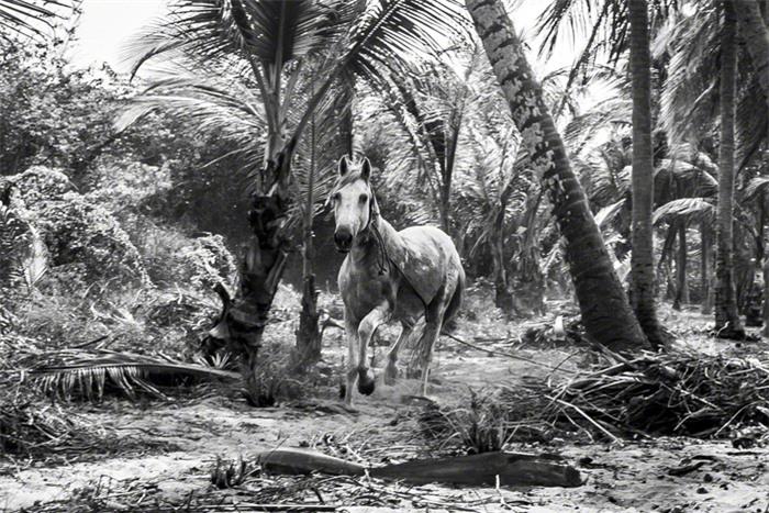 Kogi, bộ tộc ăn chay, thân thiện với môi trường - Ảnh 4.