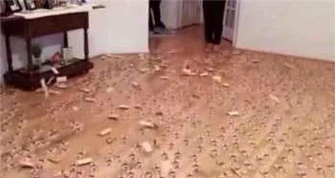 Mua bẫy chuột về đặt khắp nhà rồi ở tạm nơi khác, 2 ngày sau trở về, cảnh tượng lúc vừa mở cửa khiến người đàn ông bủn rủn - Ảnh 2.