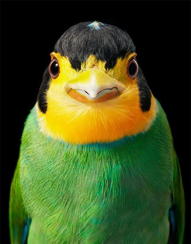 Đầu cắt moi đến râu quai nón - chùm ảnh chân dung cực nghệ của một số loài chim siêu hiếm có khó tìm - Ảnh 12.