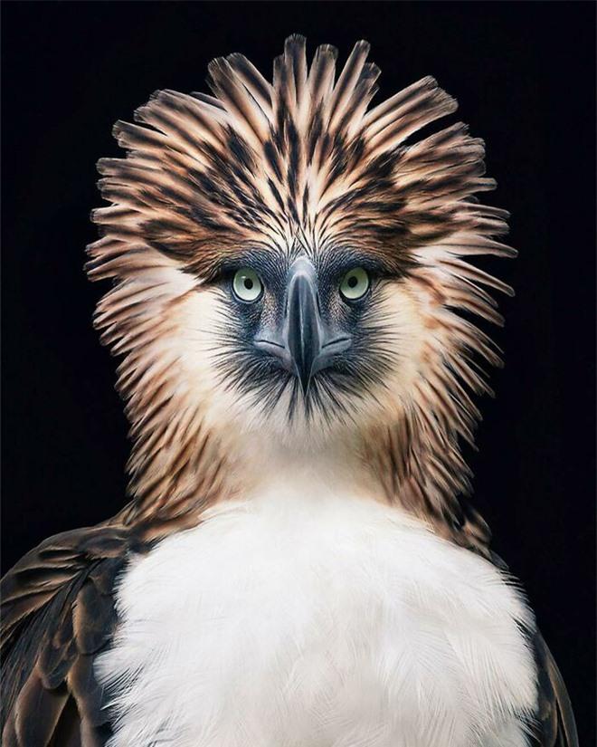 Đầu cắt moi đến râu quai nón - chùm ảnh chân dung cực nghệ của một số loài chim siêu hiếm có khó tìm - Ảnh 14.