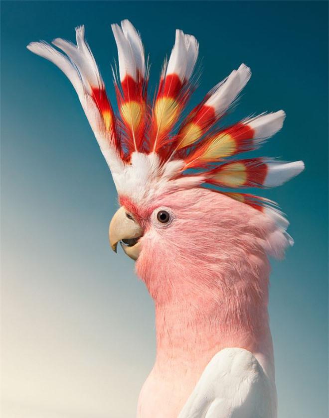 Đầu cắt moi đến râu quai nón - chùm ảnh chân dung cực nghệ của một số loài chim siêu hiếm có khó tìm - Ảnh 16.