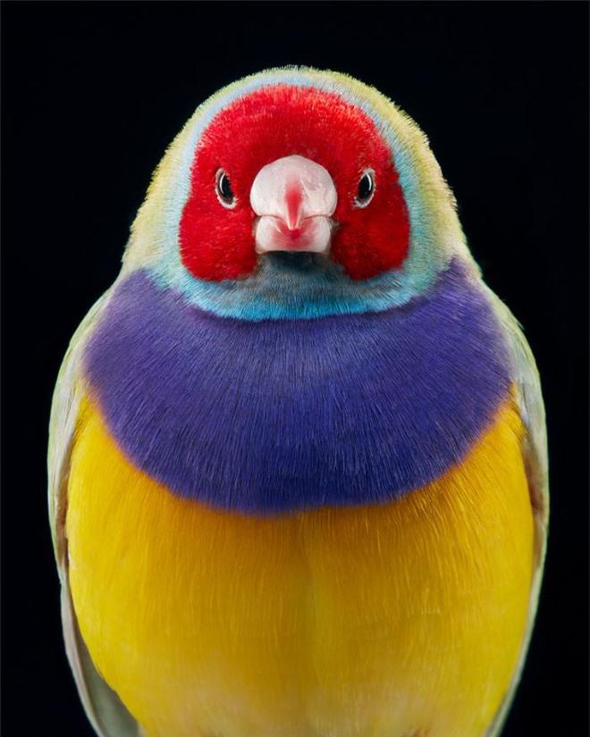 Đầu cắt moi đến râu quai nón - chùm ảnh chân dung cực nghệ của một số loài chim siêu hiếm có khó tìm - Ảnh 17.