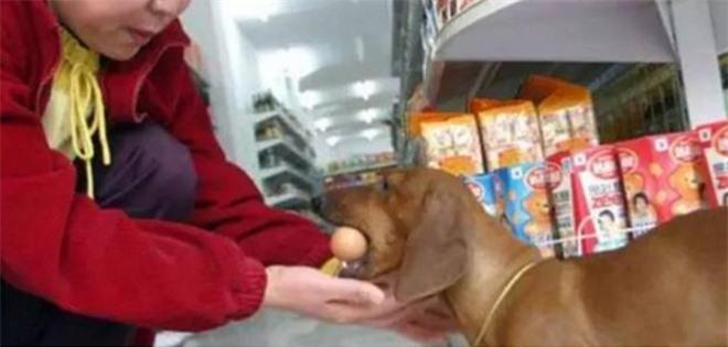 Muốn chủ nhân mua trứng gà cho mình, cún cưng làm ra 1 hành động khiến nhiều người không khỏi bật cười vì độ láu cá - Ảnh 2.