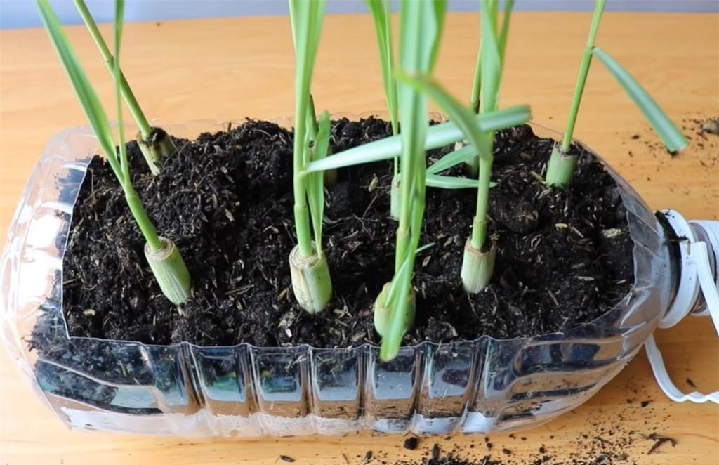 Cách trồng 5 loại cây gia vị trong bếp, ăn thoải mái, hết lại tự lên  - Ảnh 2.