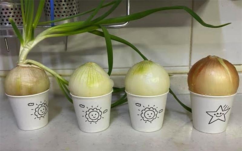 Cách trồng 5 loại cây gia vị trong bếp, ăn thoải mái, hết lại tự lên  - Ảnh 5.