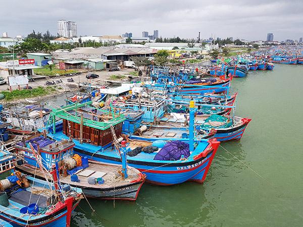 Đà Nẵng: Phát hiện thêm 20 ca mắc COVID-19 tại cảng cá lớn nhất miền Trung