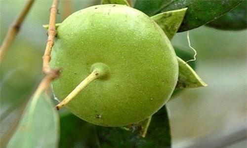 Loài cây mọc hoang, được người miền Tây chế biến món ăn dân dã, xuất khẩu sang nước ngoài bán trong siêu thị - Ảnh 8.