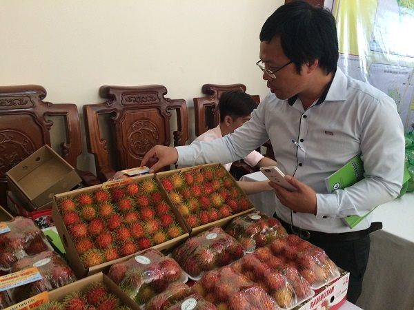 Xuất khẩu nông sản sang Anh: Doanh nghiệp Việt phải sản xuất theo Global GAP hoặc Euro GAP