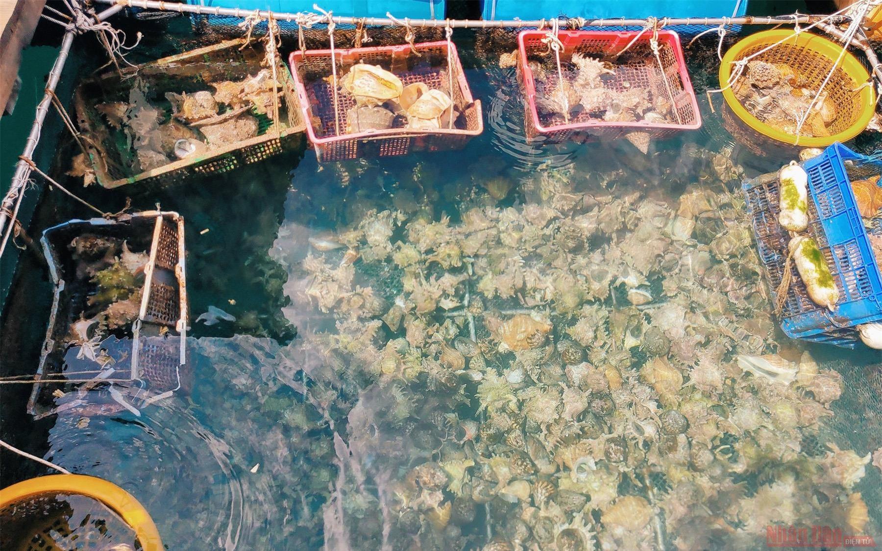 Côn Đảo: Một góc bình yên -1