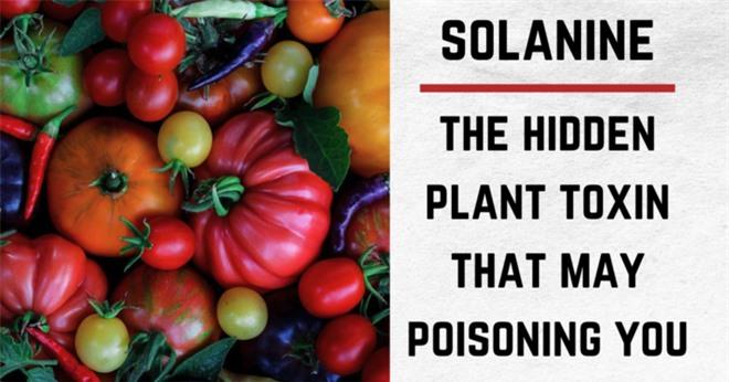 Những điều bạn chưa biết về khoai tây: có họ hàng với cà chua, cà tím và nhiều cây có độc, tự sản sinh chất độc thần kinh khi mọc mầm - Ảnh 2.