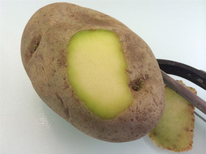 Những điều bạn chưa biết về khoai tây: có họ hàng với cà chua, cà tím và nhiều cây có độc, tự sản sinh chất độc thần kinh khi mọc mầm - Ảnh 4.