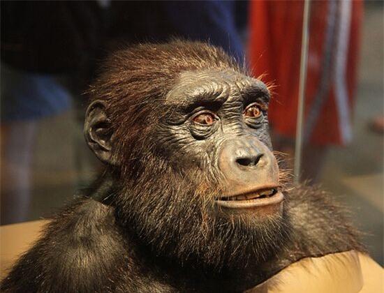 10 triệu năm nữa các loài động vật sẽ như thế nào? - Ảnh 1.