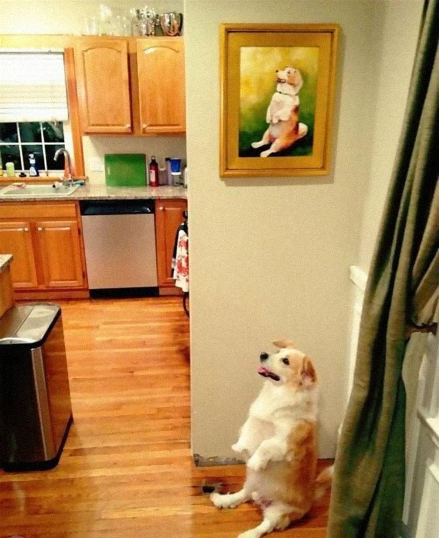 Biểu cảm và hành động của chú chó giống hệt bức ảnh.