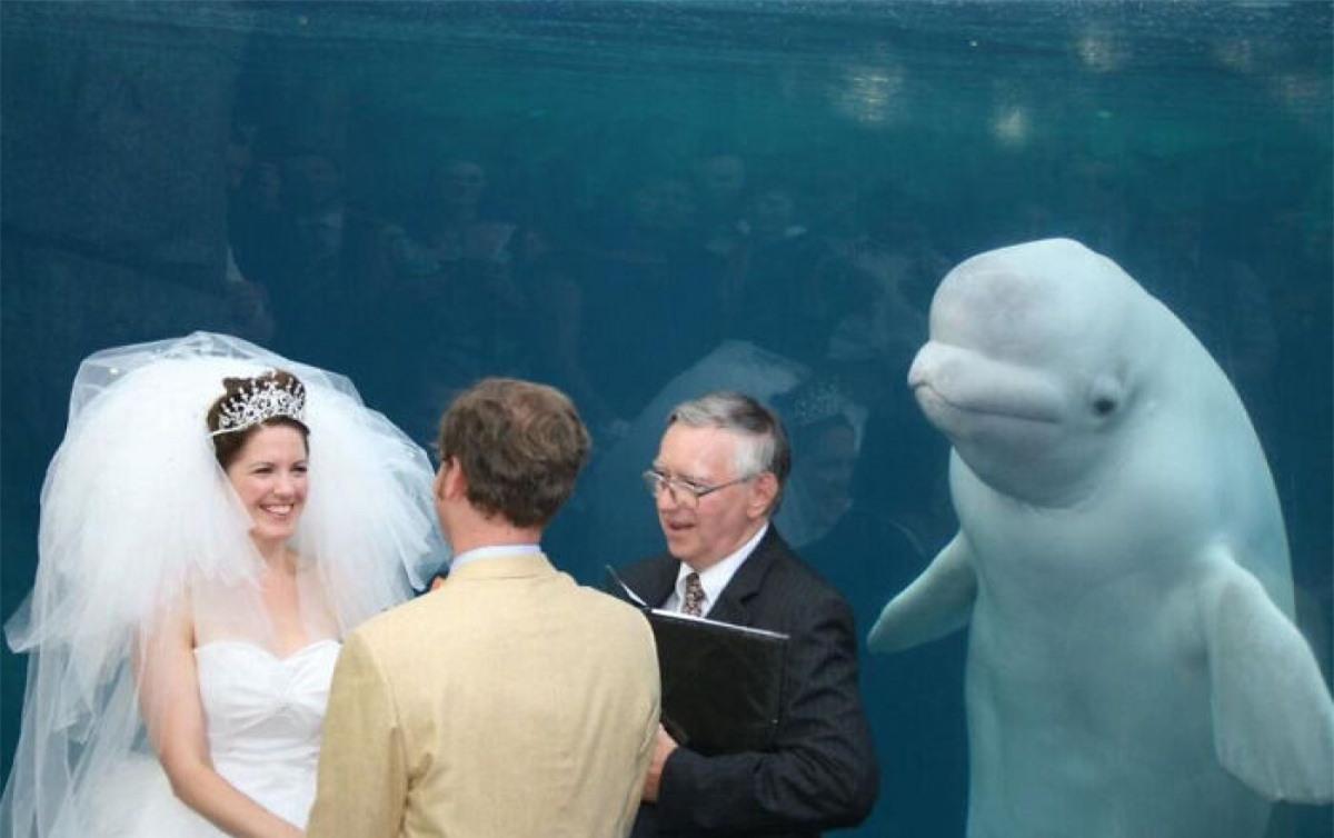 Vị khách không mời mà đến trong đám cưới.