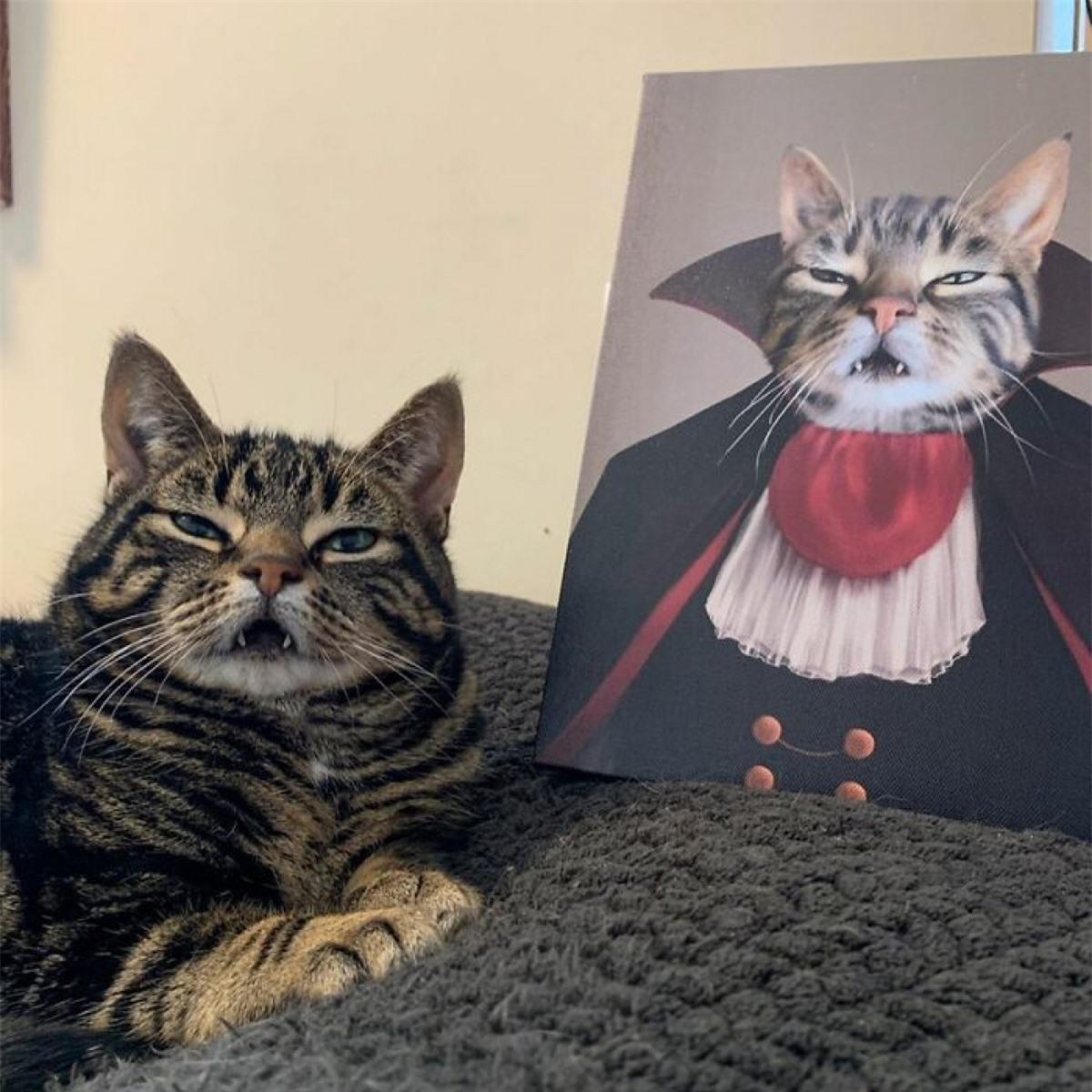 Chú mèo có biểu cảm giống hệt bức tranh.