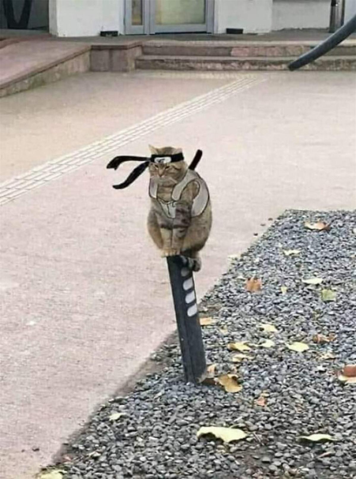 Chú mèo trổ tài làm Ninja