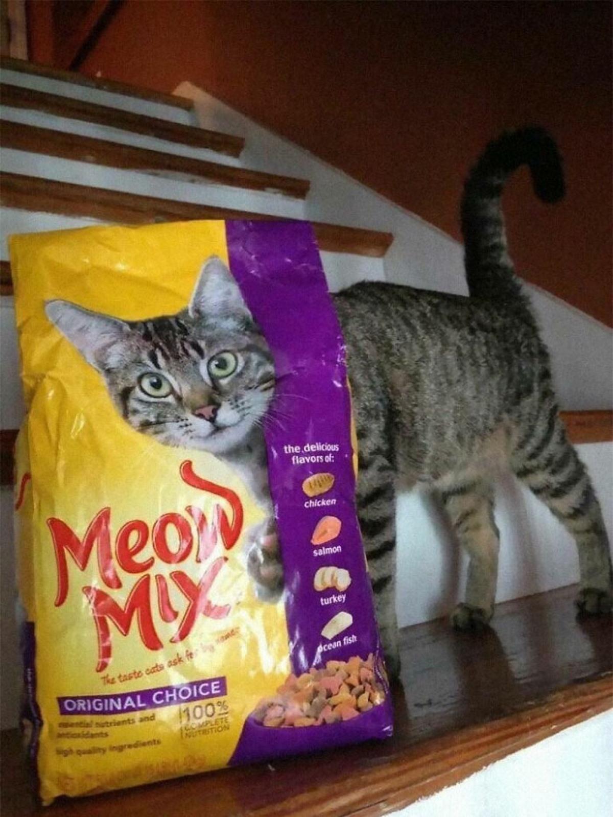 Hình ảnh trùng hợp đến lạ kỳ. Chú mèo như thể bước ra từ túi thức ăn.