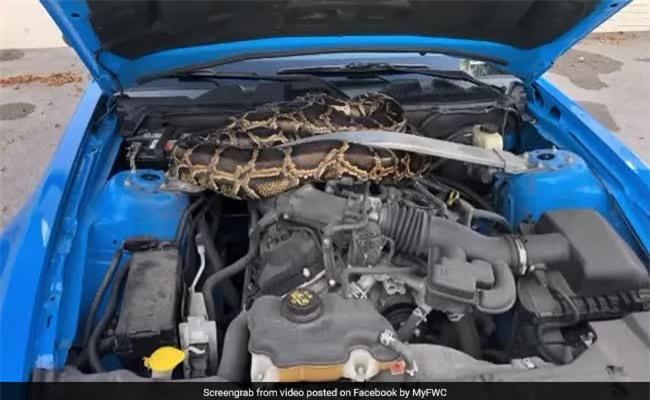 Thấy tiếng động lạ trong chiếc xe ô tô, người dân gọi báo cơ quan chức năng rồi sốc với diễn biến sau đó - Ảnh 4.