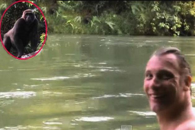 Nuôi 1 con khỉ đột rồi thả về tự nhiên, 5 năm sau người đàn ông bất chấp đi tìm lại và cái kết ngoài tưởng tượng