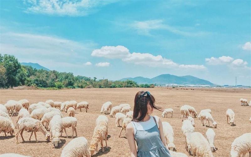 """Đồng cừu An Hòa: Điểm """"check-in"""" gây sốt ở Ninh Thuận  -0"""