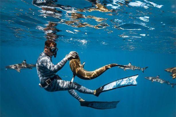 Chùm ảnh: Rùng mình cảnh thợ lặn chơi đùa, âu yếm cá mập hổ khổng lồ ảnh 5