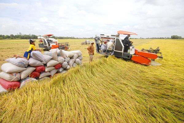 """Khơi thông được điểm """"nghẽn"""" gây tắc trong lưu thông sẽ giải quyết được bài toán lúa gạo rớt giá."""