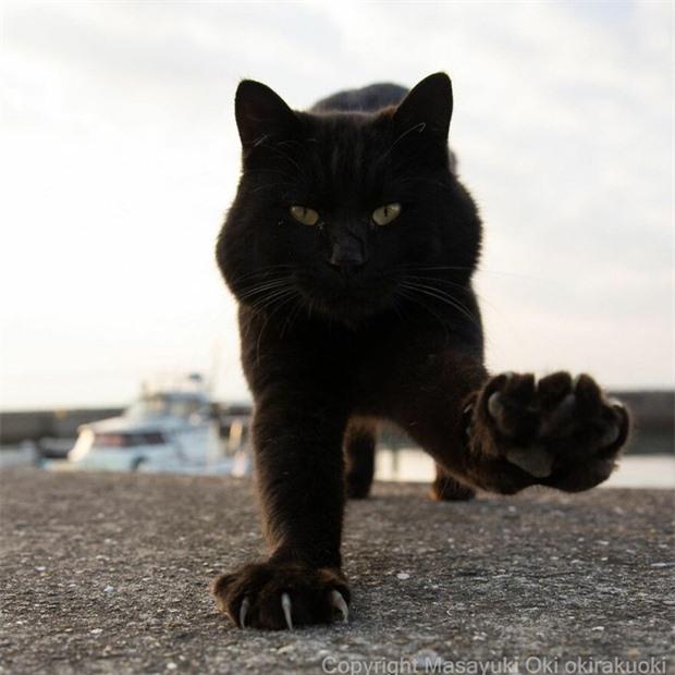 Bộ ảnh cuộc sống thường ngày của 500 anh em mèo hoang cute nhưng không kém phần lôm côm ở Nhật Bản - Ảnh 1.