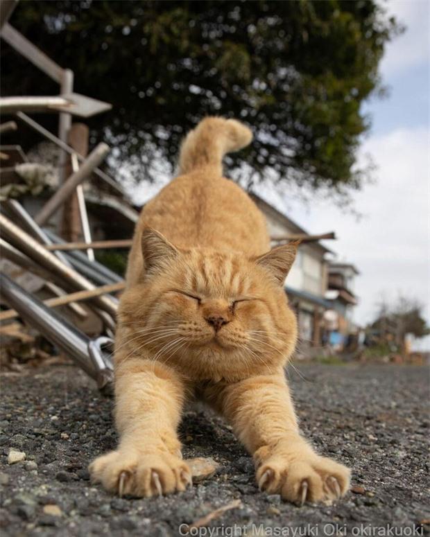 Bộ ảnh cuộc sống thường ngày của 500 anh em mèo hoang cute nhưng không kém phần lôm côm ở Nhật Bản - Ảnh 10.