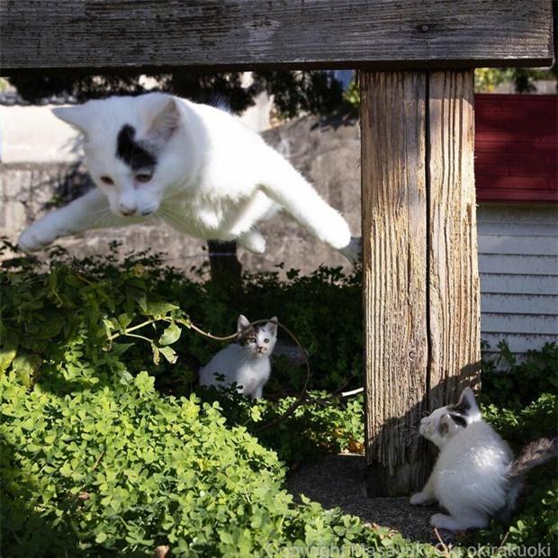 Bộ ảnh cuộc sống thường ngày của 500 anh em mèo hoang cute nhưng không kém phần lôm côm ở Nhật Bản - Ảnh 11.