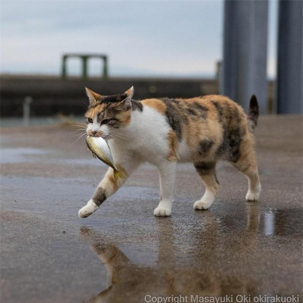 Bộ ảnh cuộc sống thường ngày của 500 anh em mèo hoang cute nhưng không kém phần lôm côm ở Nhật Bản - Ảnh 12.