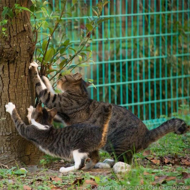 Bộ ảnh cuộc sống thường ngày của 500 anh em mèo hoang cute nhưng không kém phần lôm côm ở Nhật Bản - Ảnh 13.