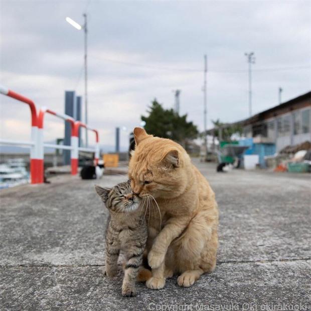 Bộ ảnh cuộc sống thường ngày của 500 anh em mèo hoang cute nhưng không kém phần lôm côm ở Nhật Bản - Ảnh 14.