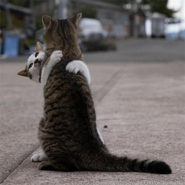 Bộ ảnh cuộc sống thường ngày của 500 anh em mèo hoang cute nhưng không kém phần lôm côm ở Nhật Bản - Ảnh 15.