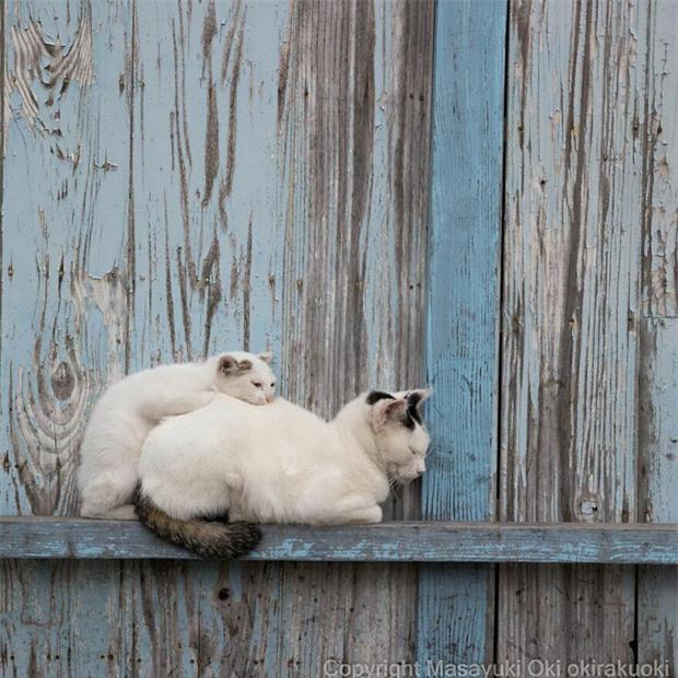 Bộ ảnh cuộc sống thường ngày của 500 anh em mèo hoang cute nhưng không kém phần lôm côm ở Nhật Bản - Ảnh 16.