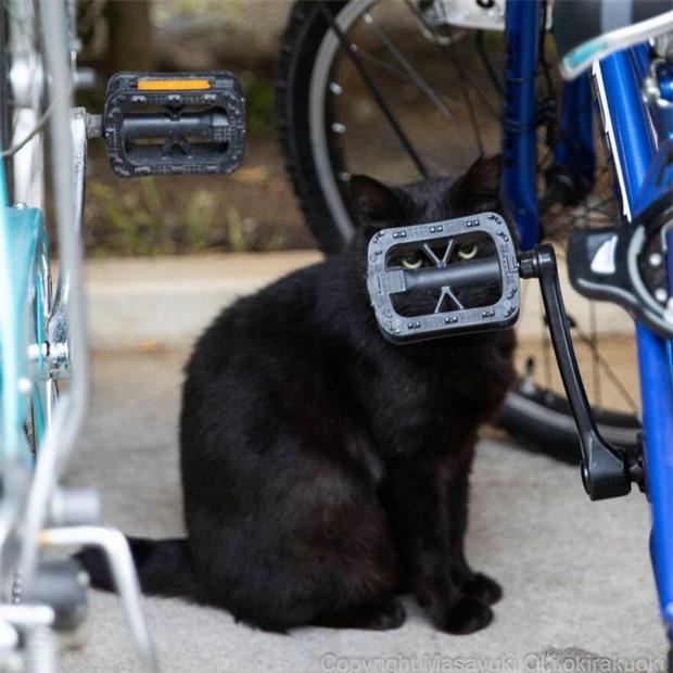Bộ ảnh cuộc sống thường ngày của 500 anh em mèo hoang cute nhưng không kém phần lôm côm ở Nhật Bản - Ảnh 2.