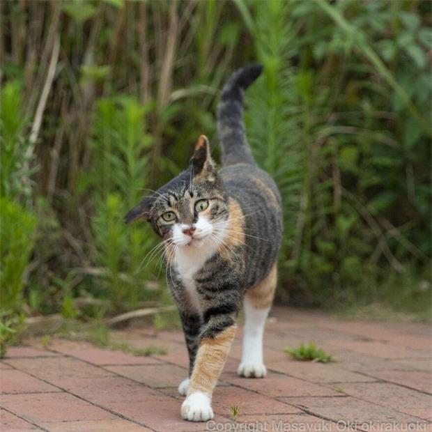 Bộ ảnh cuộc sống thường ngày của 500 anh em mèo hoang cute nhưng không kém phần lôm côm ở Nhật Bản - Ảnh 3.