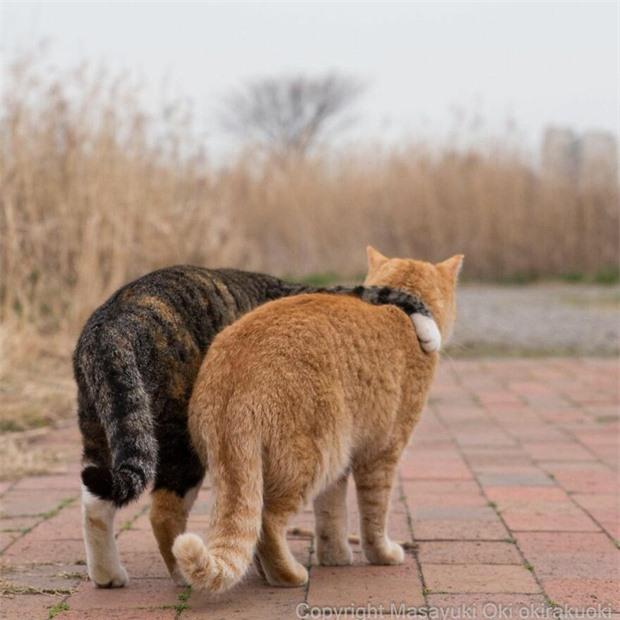 Bộ ảnh cuộc sống thường ngày của 500 anh em mèo hoang cute nhưng không kém phần lôm côm ở Nhật Bản - Ảnh 4.