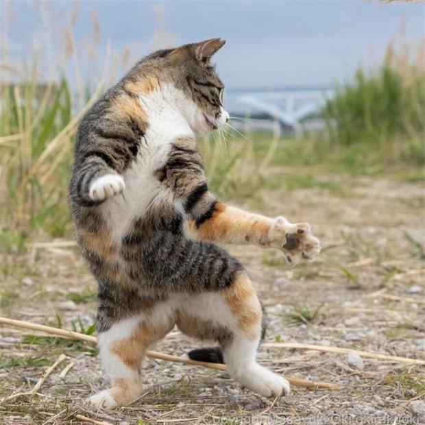 Bộ ảnh cuộc sống thường ngày của 500 anh em mèo hoang cute nhưng không kém phần lôm côm ở Nhật Bản - Ảnh 5.