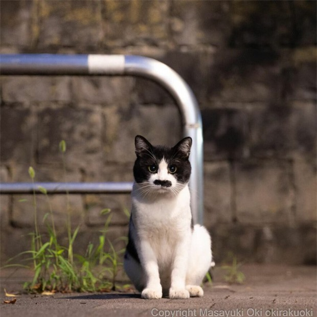 Bộ ảnh cuộc sống thường ngày của 500 anh em mèo hoang cute nhưng không kém phần lôm côm ở Nhật Bản - Ảnh 6.