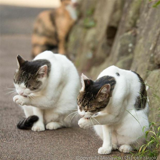 Bộ ảnh cuộc sống thường ngày của 500 anh em mèo hoang cute nhưng không kém phần lôm côm ở Nhật Bản - Ảnh 7.