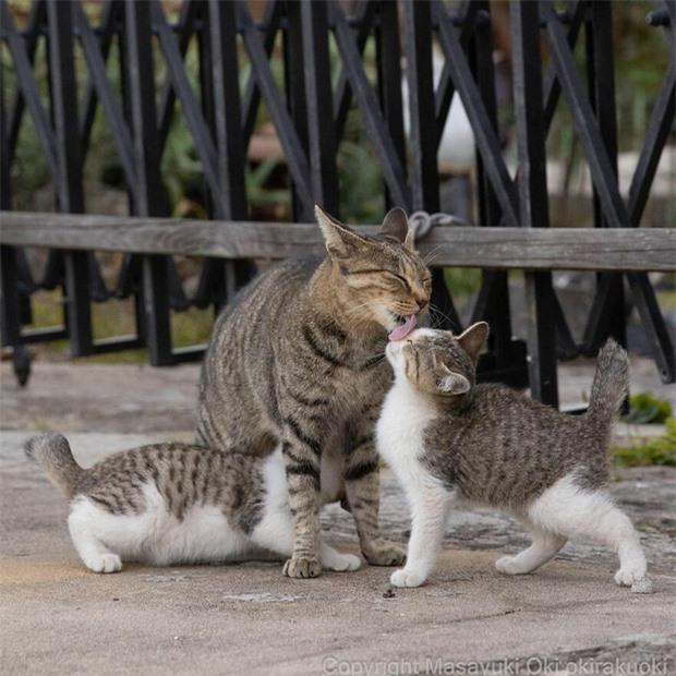Bộ ảnh cuộc sống thường ngày của 500 anh em mèo hoang cute nhưng không kém phần lôm côm ở Nhật Bản - Ảnh 8.