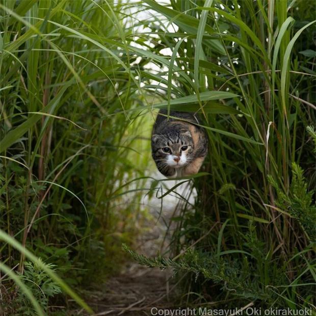 Bộ ảnh cuộc sống thường ngày của 500 anh em mèo hoang cute nhưng không kém phần lôm côm ở Nhật Bản - Ảnh 9.