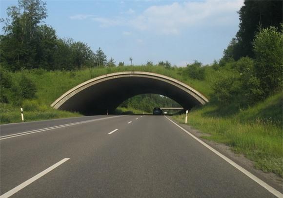 Những công trình giao thông dành riêng cho động vật
